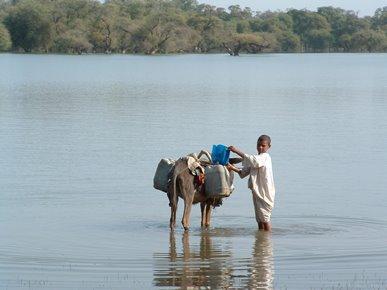 Un bambino intento a raccogliere l'acqua nello Stato di Kassala